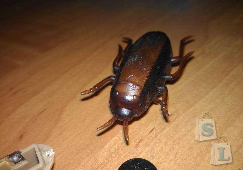 Aliexpress: Электронный таракан - игрушка для Нафани