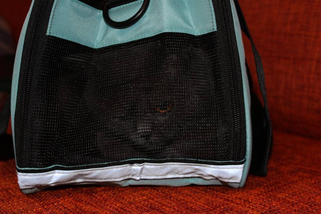TomTop: Переноска для кота