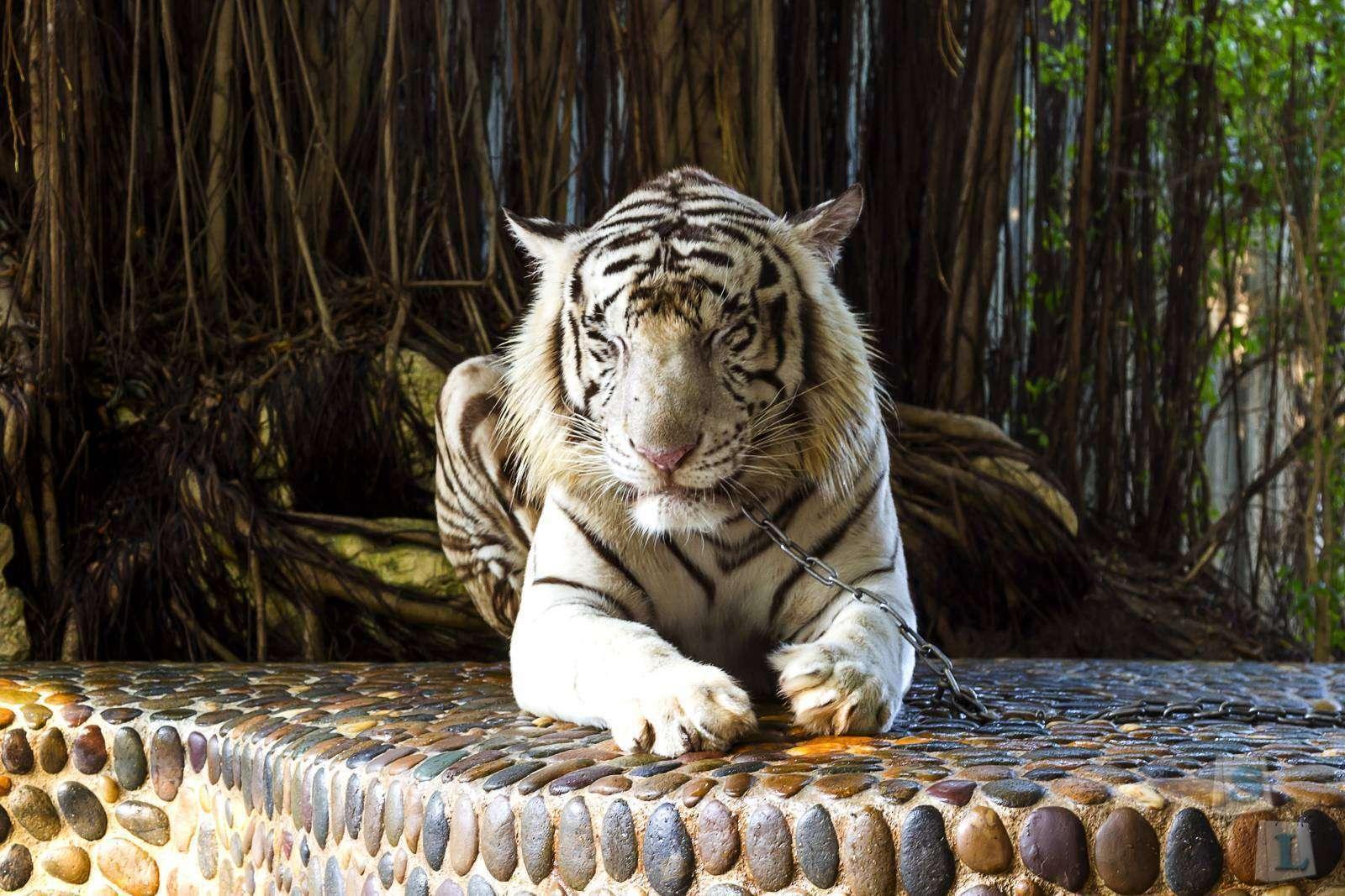 Другие: Тайский дневник. Паттайя. Ферма крокодилов, Парк Камня возрастом миллион лет