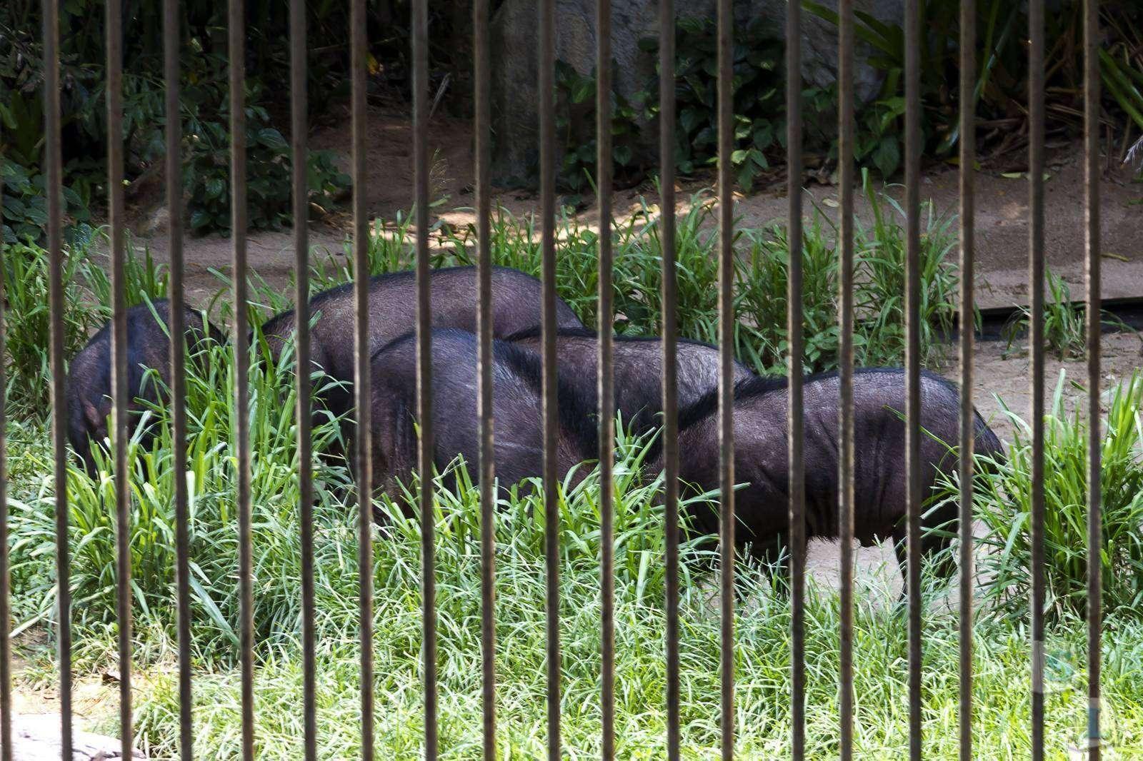Другие: Тайский дневник. Паттайя. Открытый зоопарк Khao Kheow