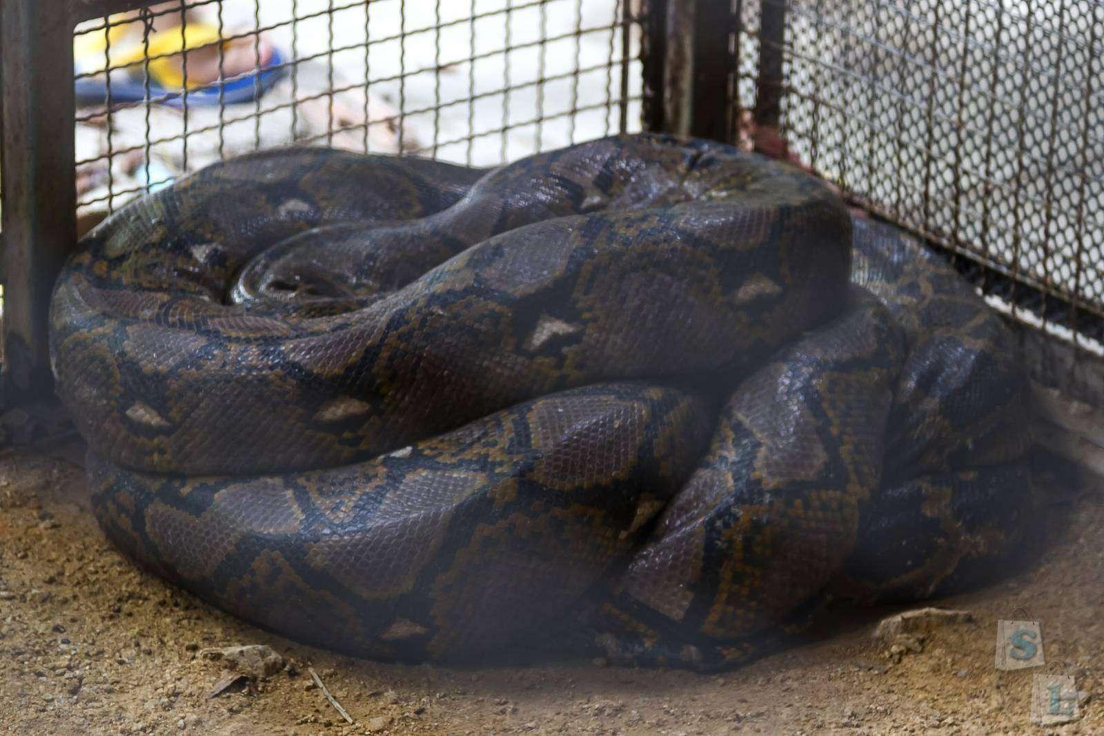 поговорим обо ферма змей в паттайе обычное белье