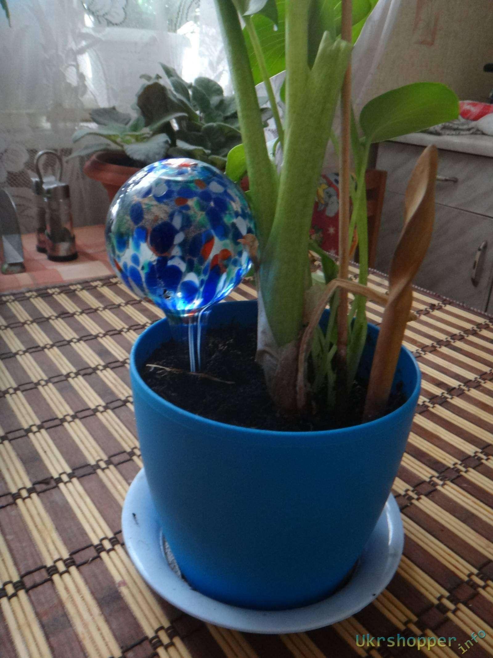 Leroy Merlin: Обзор о колбах для автоматического полива цветов Aqua Globes