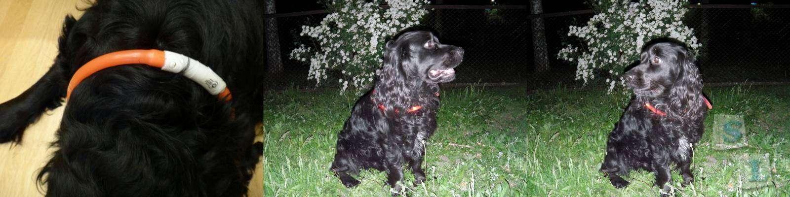 Banggood: Обзор силиконового светодиодного светящегося ошейника для собак, с USB зарядкой