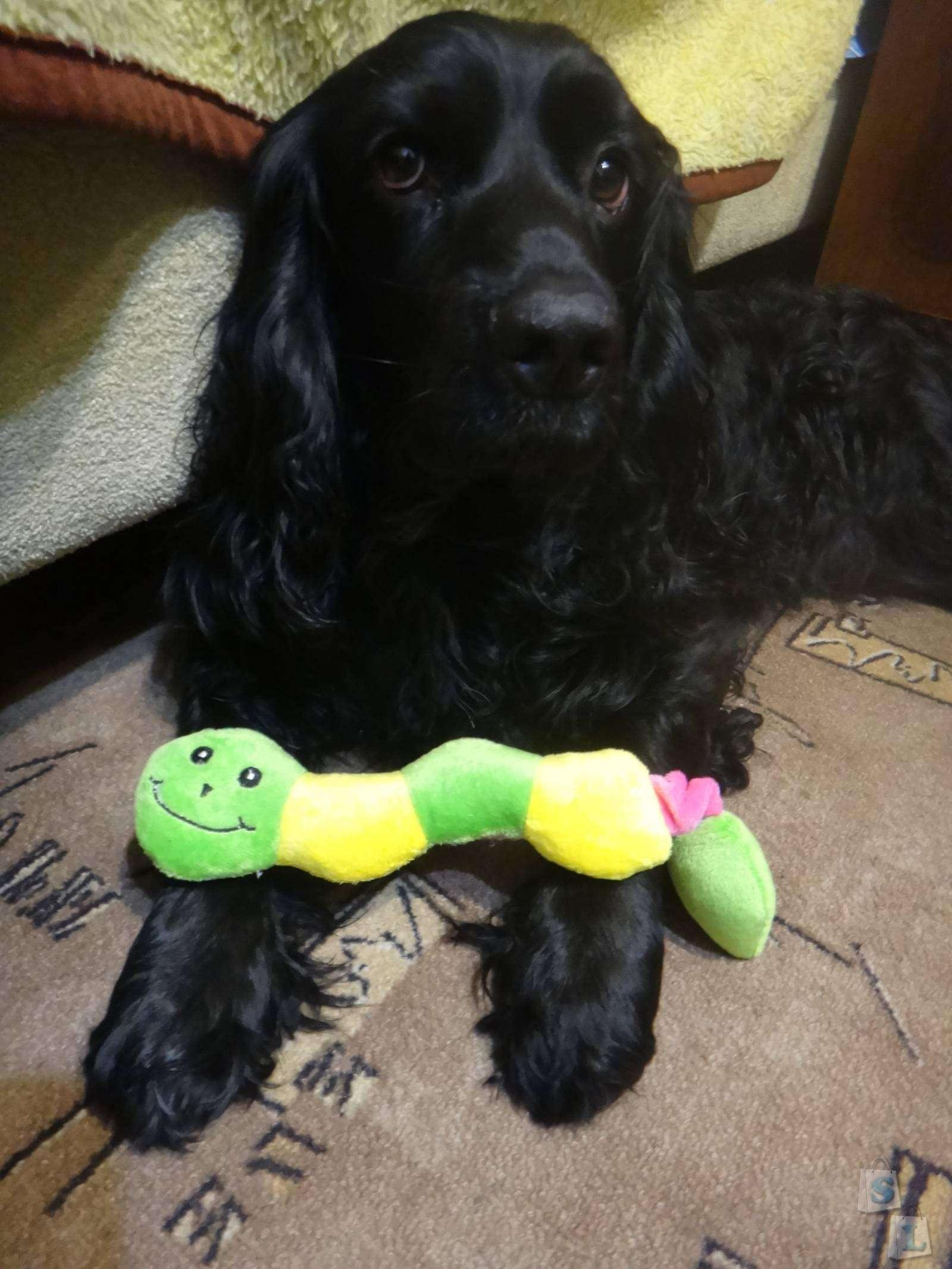 Banggood: Обзор тренировочной игрушки для собак- Chew Sound Squeaker Squeaky Dog