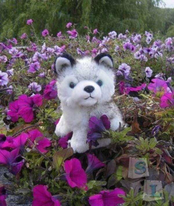 Aliexpress: Плюшевый щенок хаски