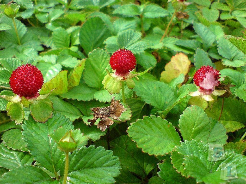 Aliexpress: '...Что выросло, то выросло! ;)' - покупка семян растений на aliexpress