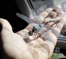 Изготовление насекомых в стиле хай-тек